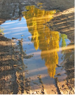 Reflections in Mud - Dons Kritzinger